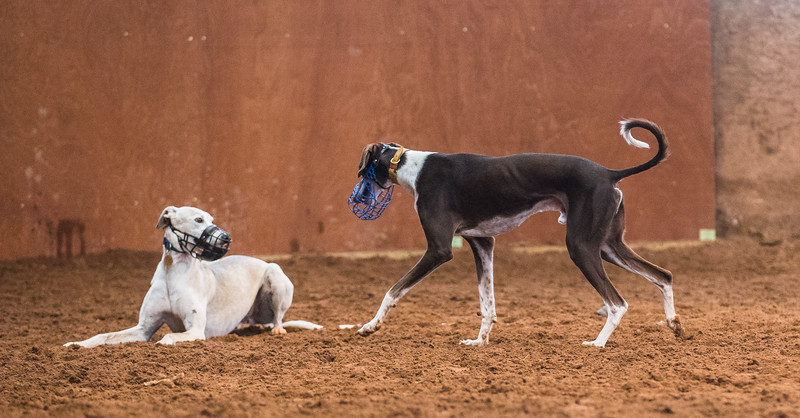 Forever Hounds Playgroup  (1254 of 1275)