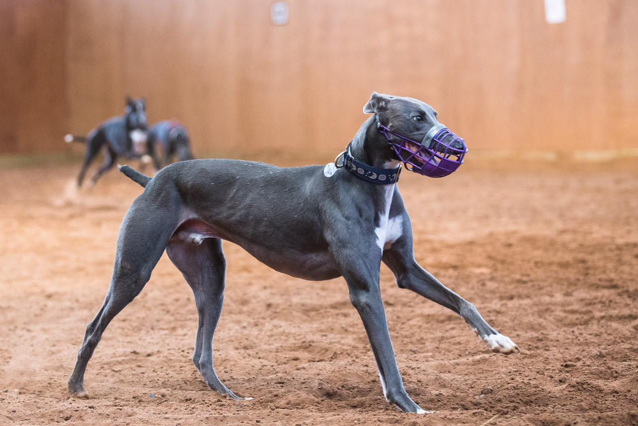 Forever Hounds Playgroup  (428 of 1254)