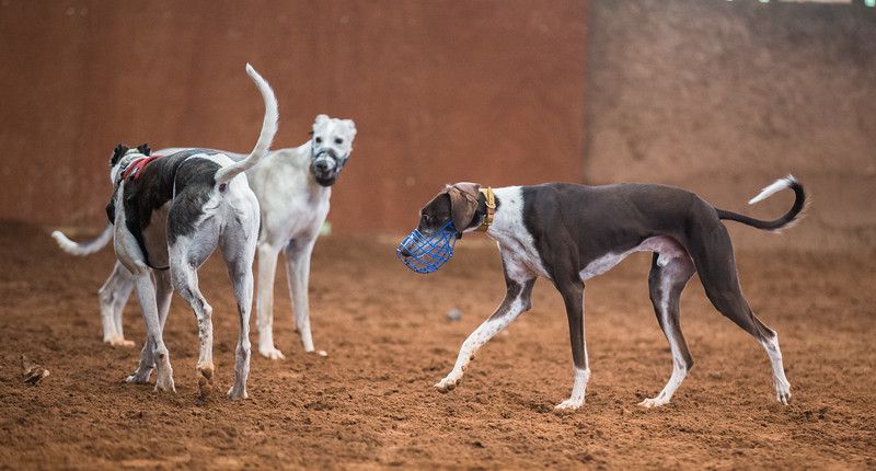 Forever Hounds Playgroup  (1270 of 1275)