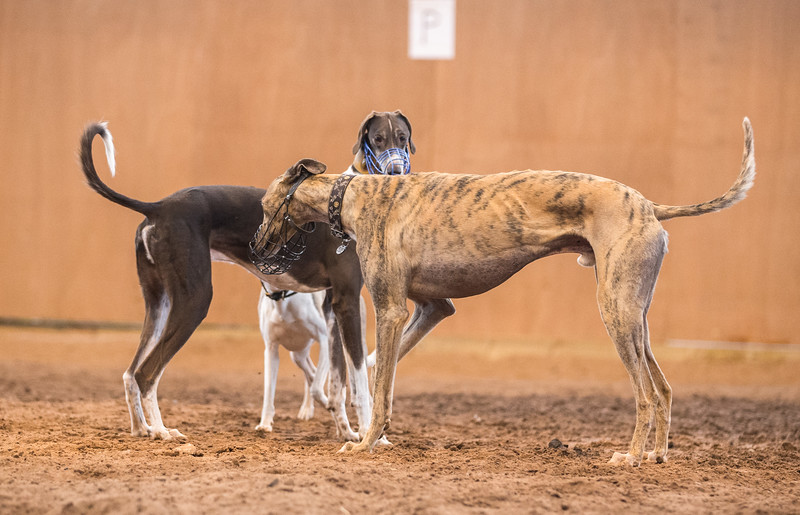 Forever Hounds Playgroup  (178 of 284)