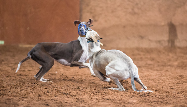Forever Hounds Playgroup  (1264 of 1275)