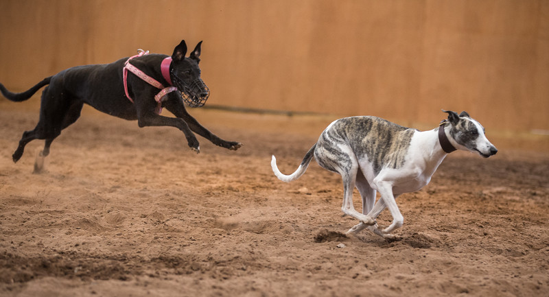 Forever Hounds Playgroup  (127 of 284)