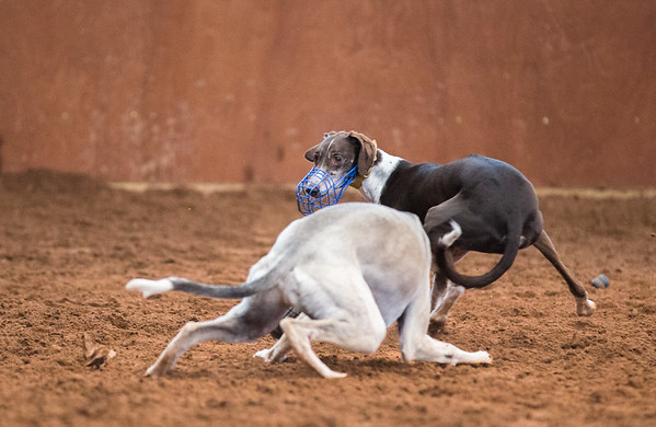 Forever Hounds Playgroup  (1262 of 1275)
