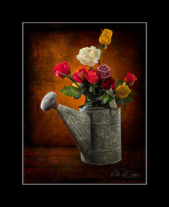 Roses in a watering can