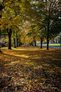 MAPLE ESPLANADE IN FALL