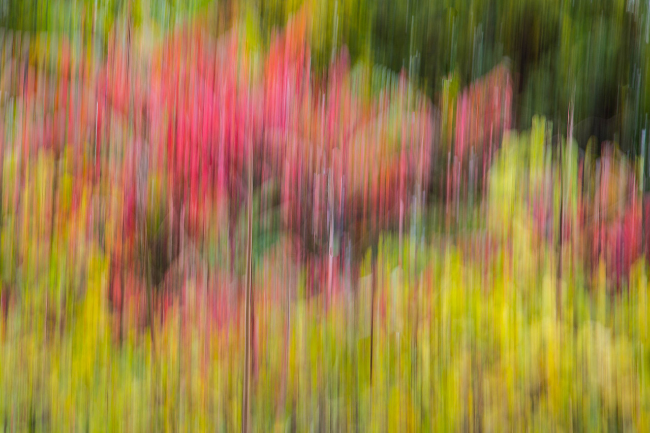 STAGHORN SUMAC IN FALL COLORS