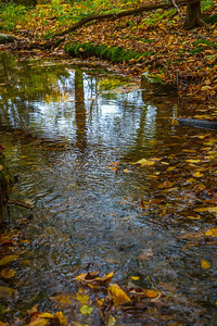 FALL FOLIAGE LEAVES ON A BROOK