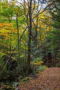 RATTLESNAKE GUTTER IN FALL COLORS