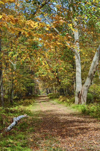 AN OLD ROAD IN THE QUABBIN FOREST