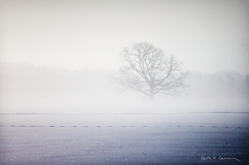 A tree in the fog