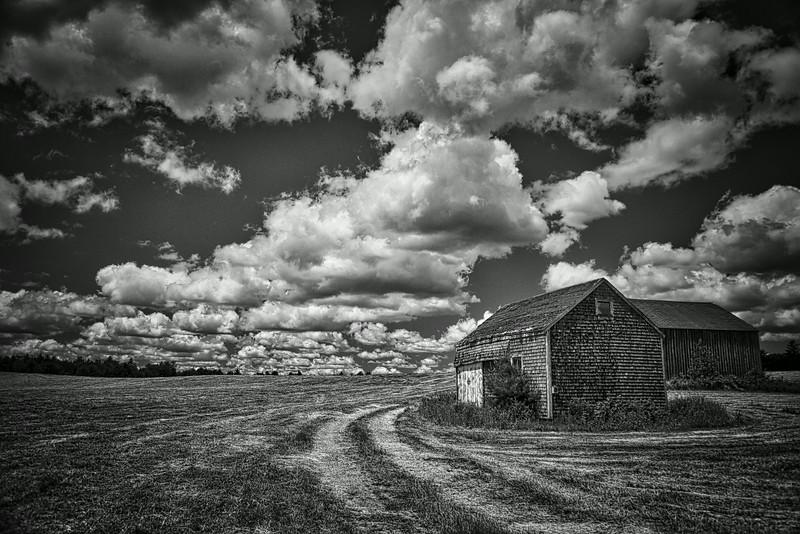 Midcoast Maine hayfield