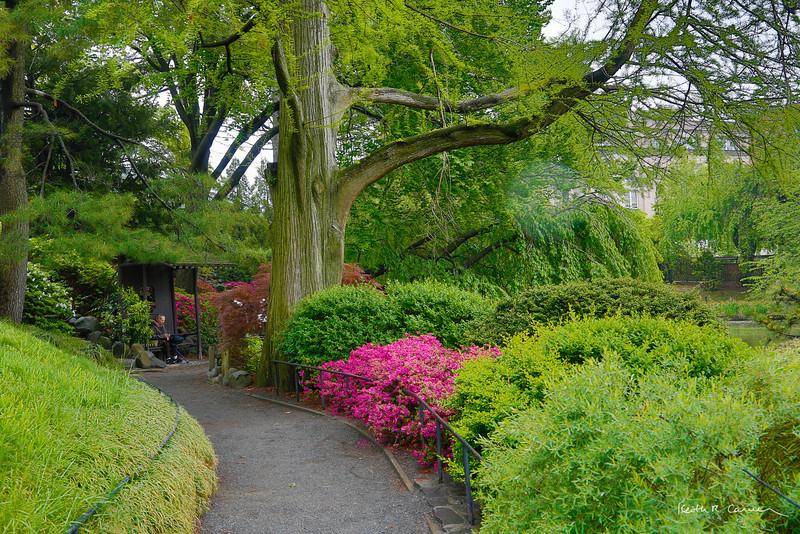 Japanese Garden, Brooklyn Botanic Garden