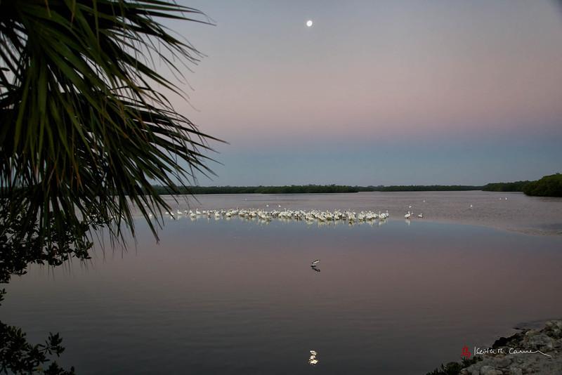 Moonset and jumping snook at Ding Darling