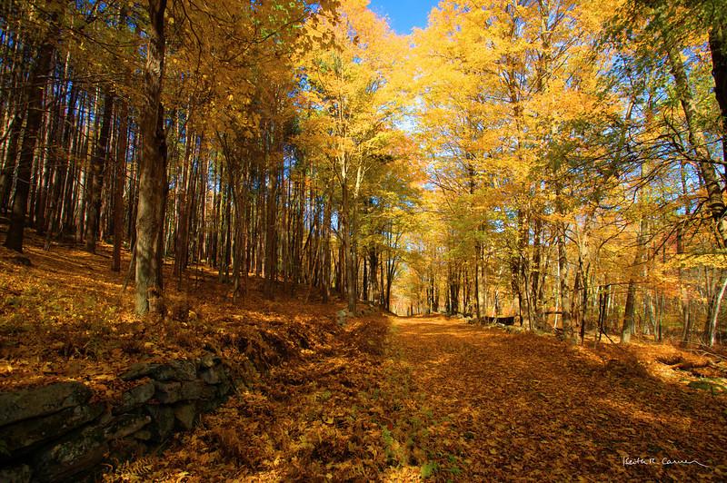 Fall foliage at Quabbin Reservoir