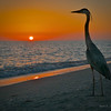 Great Blue Heron, sunset, Bowman's Beach, Sanibel, Florida