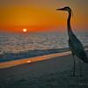 Great Blue Heron, sunset, Bowman's Beach, Sanibel, Florida