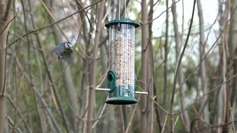 Blue tit at the feeder
