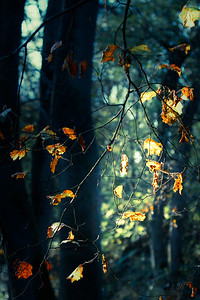 autumn leaves 4