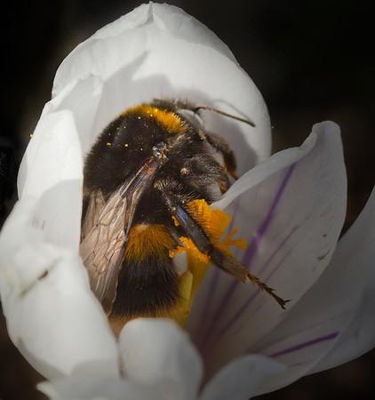 sleepy bee