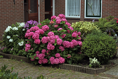 Yard gardens in Marken