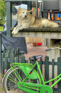 Green bike guard dog.
