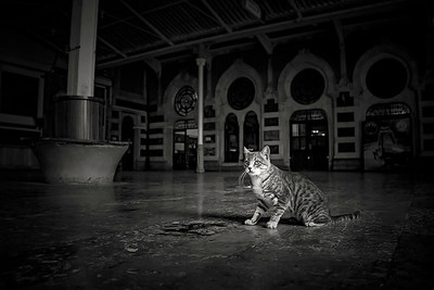 Some of the local wildlife! Feral cats occupy the untouched, and beautiful Old Istanbul train station that was the inspiration for the Agatha Christy novel, Murder On The Orient Express.