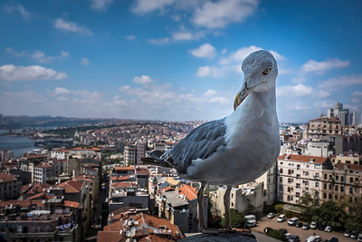 As I was shooting the city scene, this seagull flew in and landed mere inches away, not afraid at all!