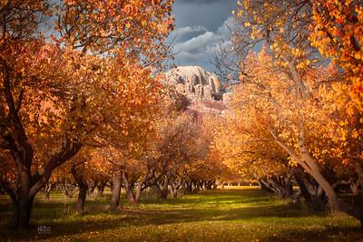 Apricot Sunset