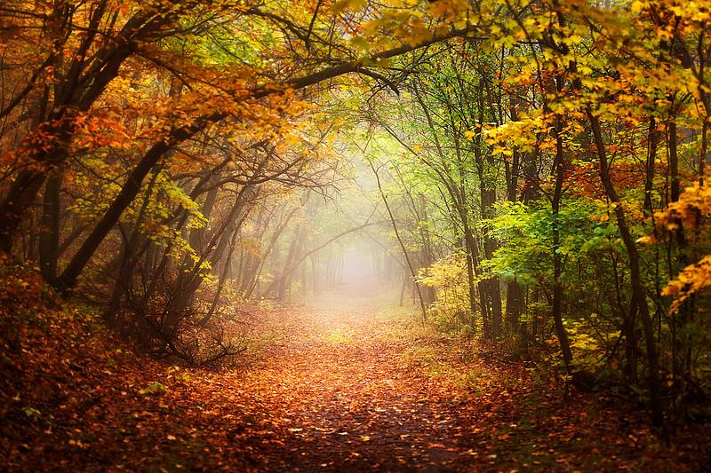 Enchanting Path