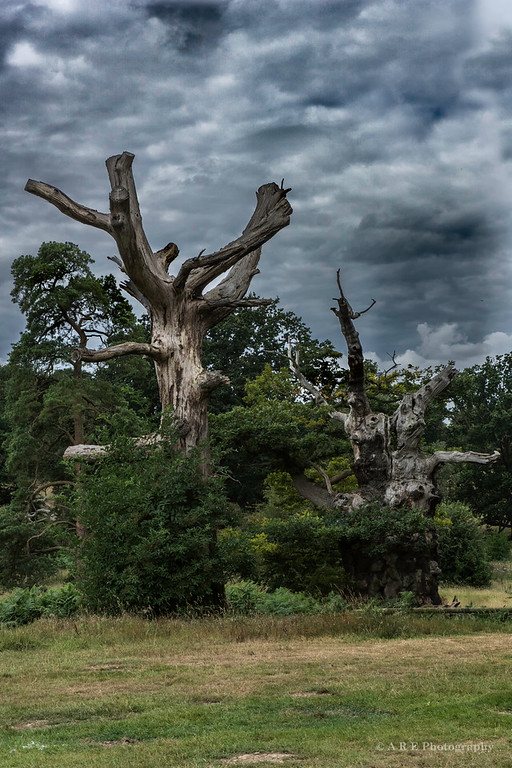 Old tree storm clouds