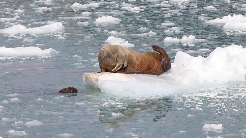 Svalbard - Making of Jääkarhu Patrick ja Operaatio Tassunjälki