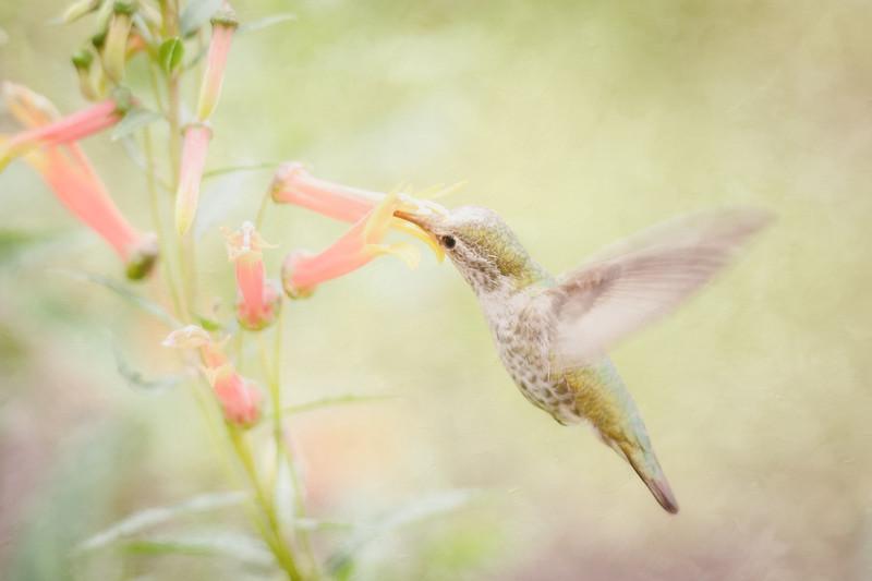 Sweet Nectar - Take 2
