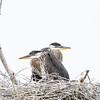 Huddled Herons