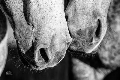 Horse Muzzling