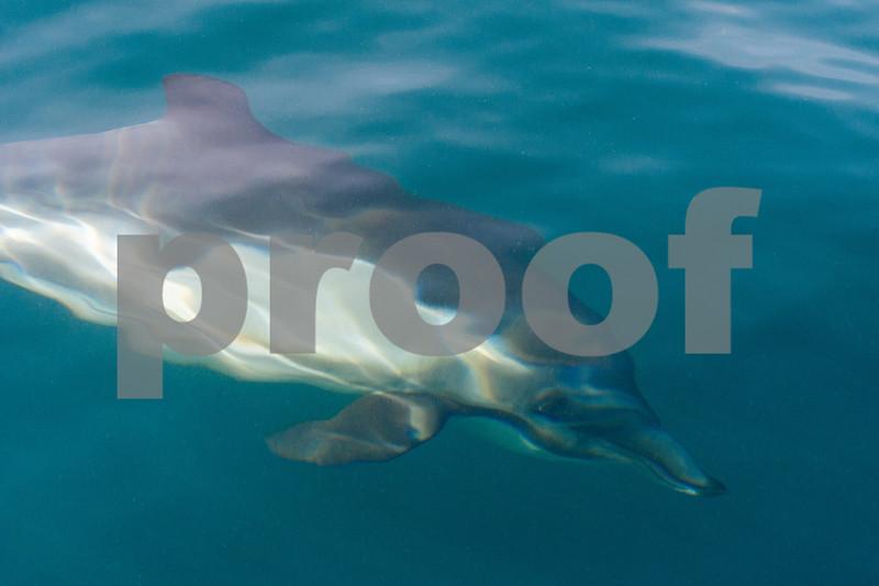 Dolphin on Newport Coast of Orange County, California