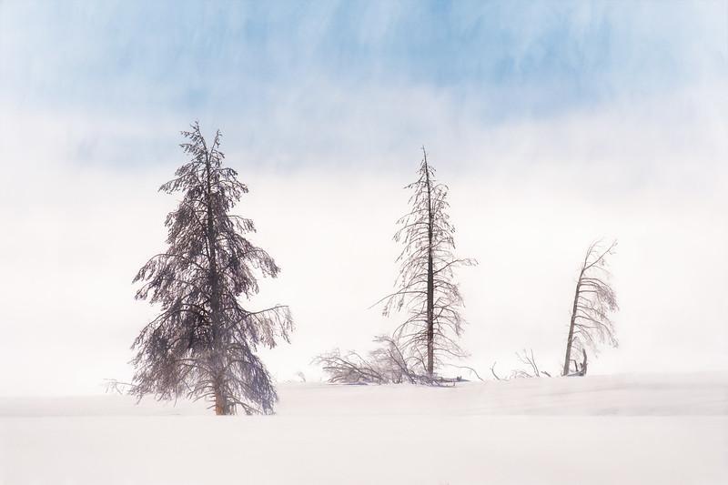 Winter's Trio