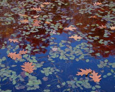 Water-shields And Oak Leaves II