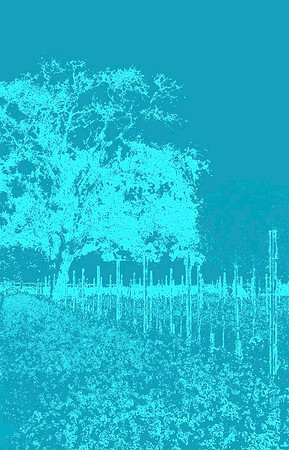 Graphic Tree in Vineyard