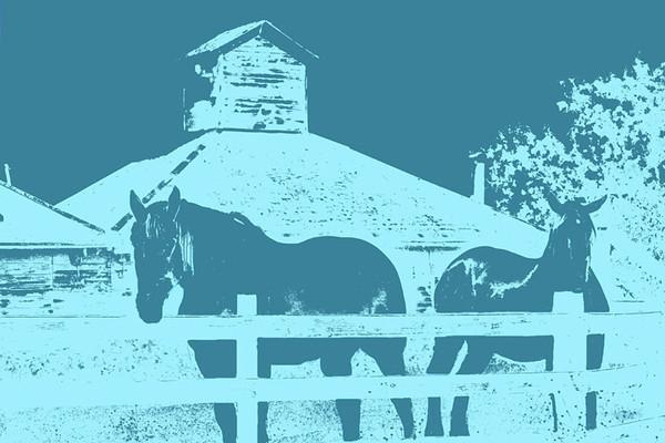 The Vintner's Horses