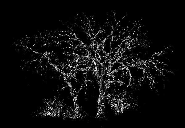 Pair of Trees II