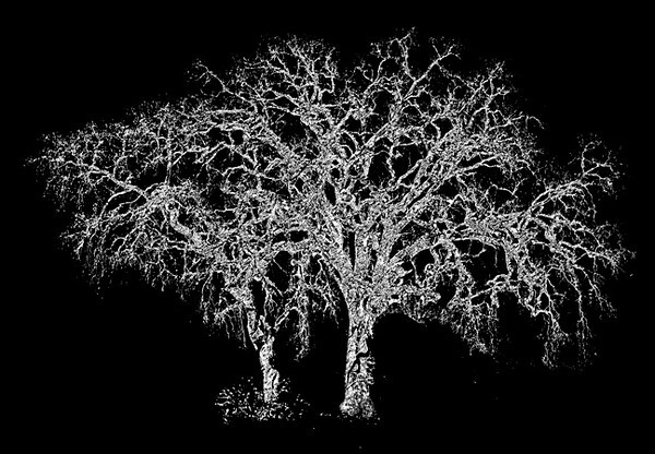 Pair of Trees I
