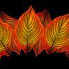 Leaf Luster