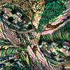 Abalone Abstract III