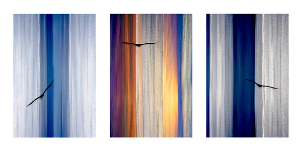 Sea Song Triptych