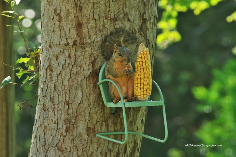 Squirrel enjoying a picnic
