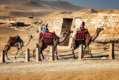 Giza Pyramids complex and camels