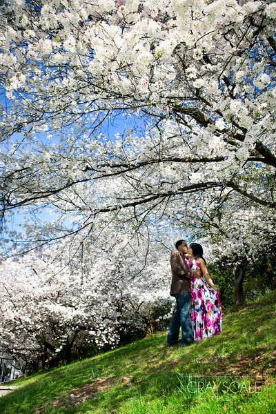 couple kiss under beautiful blooming bradford pear trees