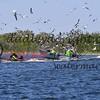 LakeSugarMEX 3-2018-112 netters and gulls