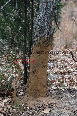 -KRanch23- 029 hog sign