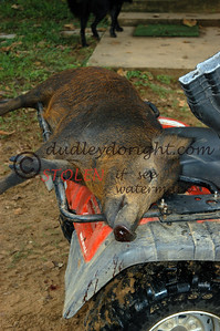 -KRanch23-007 wild feral hog